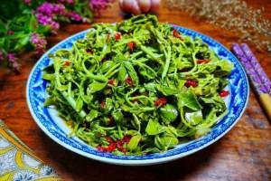 这树叶很多人都没吃过比香椿芽还香一烫一拌是最好开胃菜