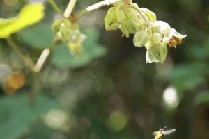 怎么区分蜂蜜的真假超有用小技巧赶忙告知身边的人......