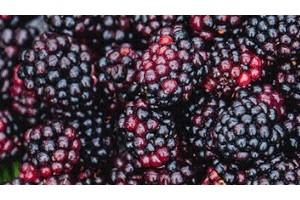 黑莓熟了创始人毛愉得的公益初心我愿人人健康从身体到心灵