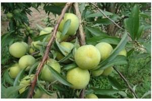 乡村常见的四种食物排毒护肝润肠通便增强体质